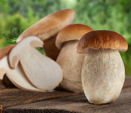 Белый гриб в лицах, или Какие бывают боровики?