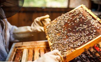 Как я стала пчеловодом