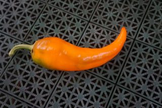Перец «Рамиро оранжевый»