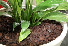 Мульча для комнатных растений — и полезно, и красиво