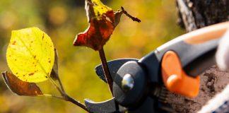 Тонкости осенней обрезки — что резать, когда и зачем