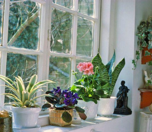 Важные особенности осеннего ухода за комнатными растениями