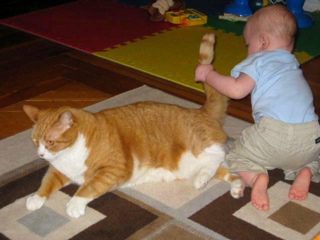 Очень часто, дергая кошку за хвост, дети так играют с питомцем, поэтому нужно объяснять, что так делать нельзя