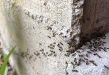 Дом без муравьёв — это просто!