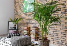 Особенности ухода за комнатными пальмами зимой