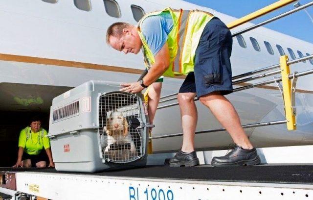 Сама мысль о том, что наша собака будет находиться в замкнутом контейнере вдали от нас в течение почти 10 часов перелёта повергла меня в ужас