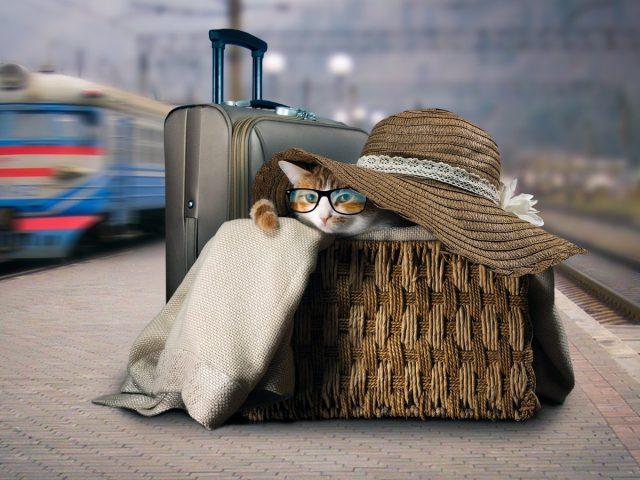 Важные правила транспортировки домашних животных — личный опыт