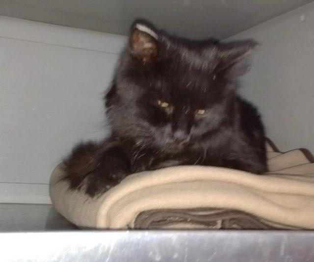 В первом поезде кошка всё осмотрела, обнюхала и обосновалась на антресоли