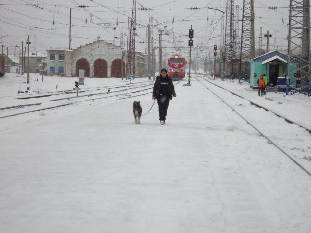 Гуляю с собакой во время остановки поезда