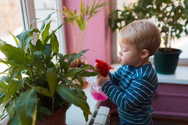 Комнатные растения в детской помогут детям научиться ухаживать за ними с малых лет