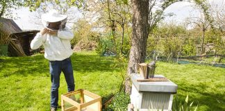 Сколько стоит стать пчеловодом, или Что купить для первой пасеки?