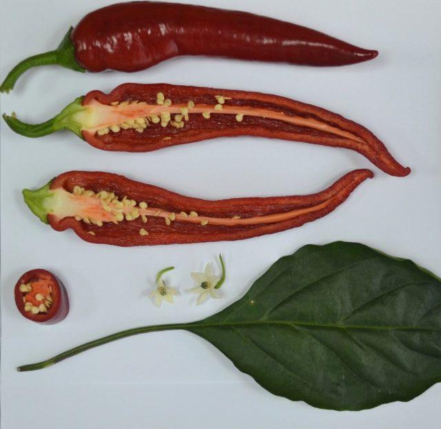 Перец сладкий «Джигит», спелые плоды
