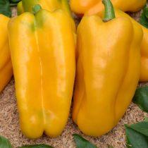 Перец сладкий «Какаду желтый»