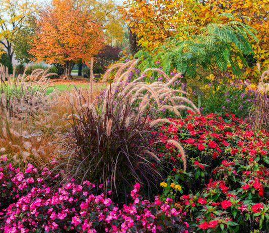 12 самых красивых и стойких растений осени