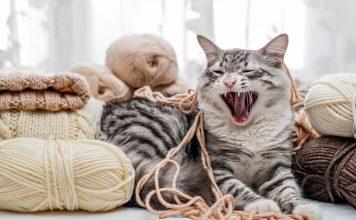Что нам хочет сказать кот?