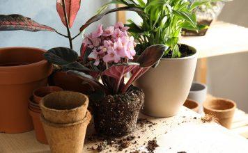 Мои хитрости размещения комнатных растений