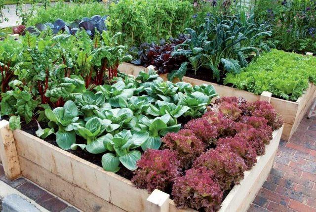 Защита от многих вредителей — в разнообразии выращиваемых культур