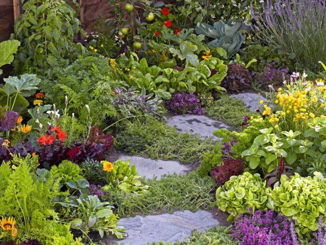 Совмещение растений с различным обликом – это еще и украшение участка