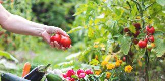 Смешанные посадки — каким культурам лучше расти вместе?
