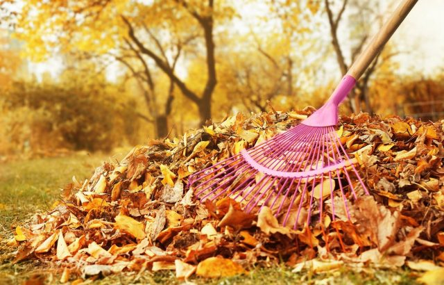 Уборка опавшей листвы — за и против
