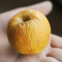 Увядание яблока