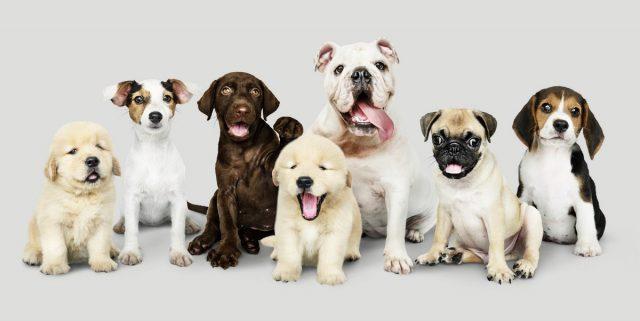 Породу собаки нужно подбирать «под себя», а не по внешности или следуя моде