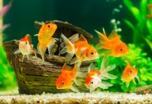 10 ошибок начинающих аквариумистов
