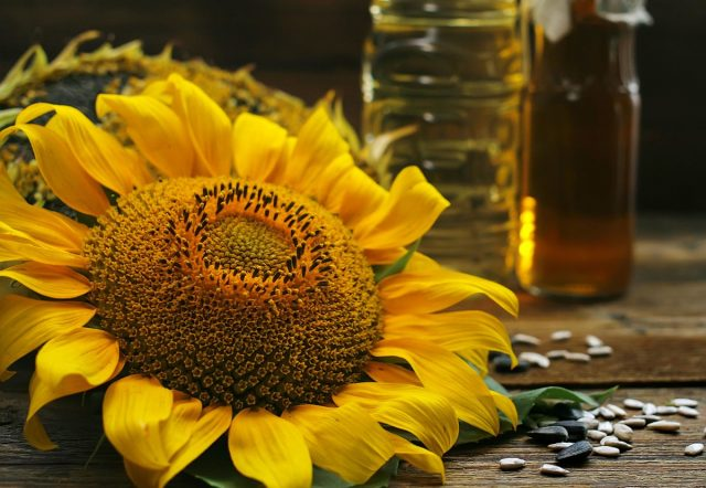 10 секретов богатого урожая подсолнечника