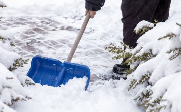 Что не забыть сделать в январе садоводу?