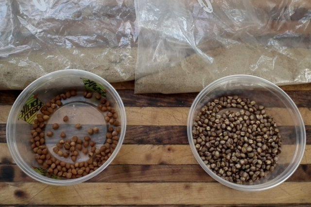 Начало года — это самое подходящее время для начала стратификации семян