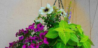 Эффектная композиция «Лиловый рассвет» для подвесных корзин