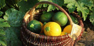 Круглые кабачки — вкуснейшая альтернатива традиционным