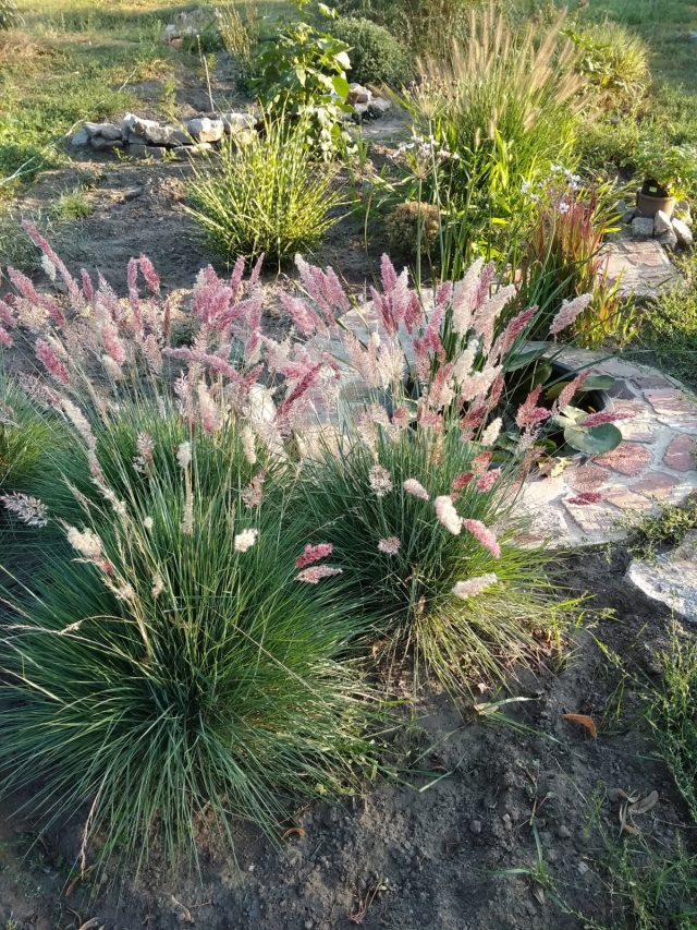 Декоративные травы идеально сочетаются с мини-водоёмом