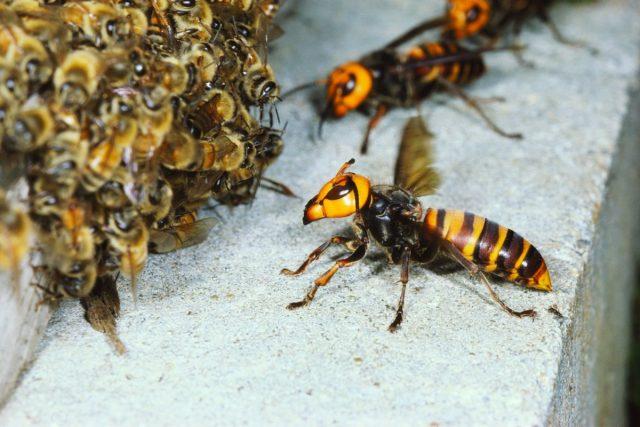 Пчелиные войны, или Печальный конец нашей первой пасеки