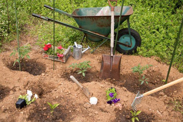 Из-за принадлежности к одному семейству вместе с перцем успешно выращивают петунии