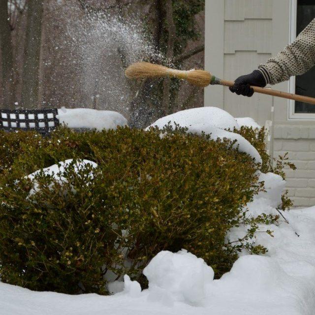Лишний снег с растений в саду желательно стряхнуть