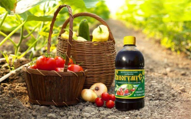 Период наливания плодов особенно важен для урожая, так как при нехватке каких-либо компонентов питания культуры сбрасывают завязи