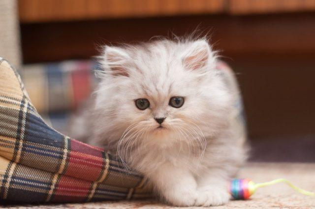 Никогда не беспокойте котенка, если он лежит на своем месте!