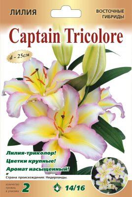 Лилия «Капитан Триколор»