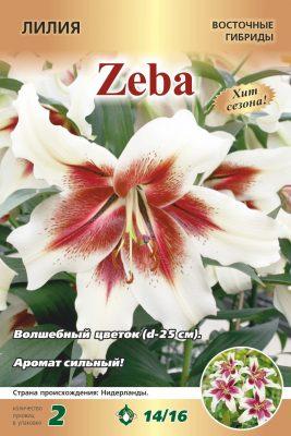 Лилия «Зеба»