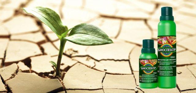 Подготовленный грунт необходимо пролить раствором «Биоспектра»
