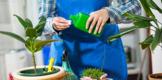 Когда и чем начинать подкармливать комнатные растения весной?