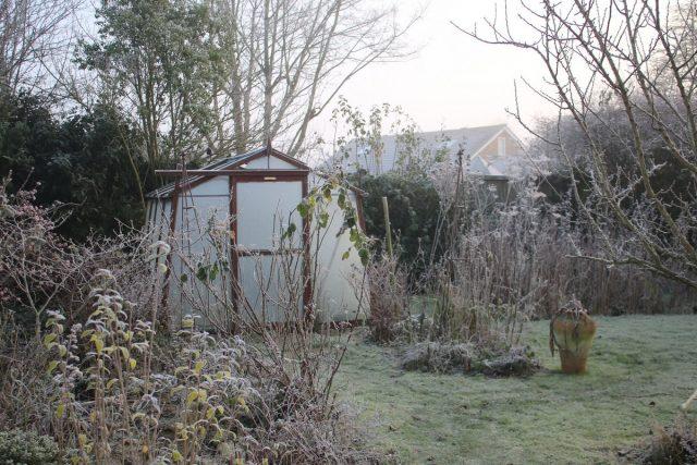 Тёплая зима — чем грозит садоводу?