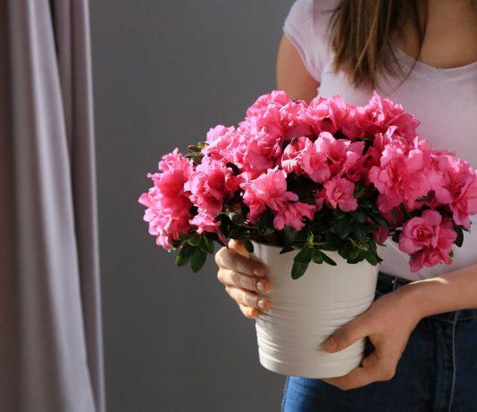 10 лучших комнатных растений для подарка
