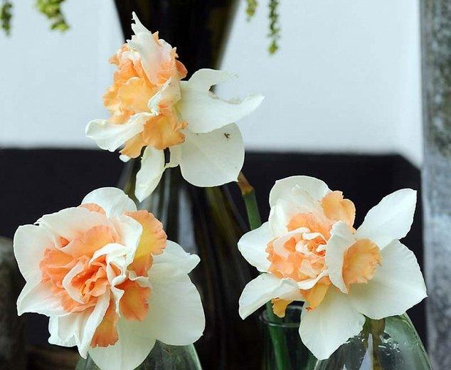 Narcissus-Replete-3