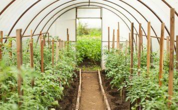 Давно известно, что длительное выращивание овощей в теплице обедняет почву