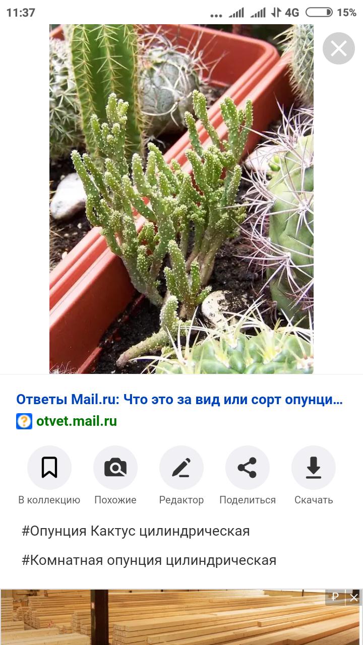 Screenshot_2020-03-30-11-37-40-621_com.android.chrome