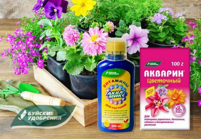 Выращивание рассады цветов для цветника