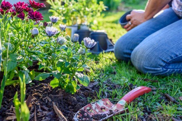 Как создать простой и красивый цветник за один сезон?
