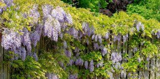 Глобальное потепление — пора сажать южные растения?